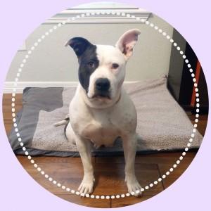 https://www.petstablished.com/pets/public/442529?awo=Demi%27s+Animal+Rescue&widget=true