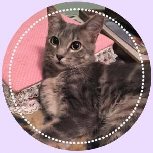 https://www.petstablished.com/pets/public/387291?awo=Demi%27s+Animal+Rescue&widget=true