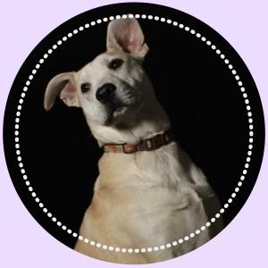 https://demisanimalrescue.com/adoptable-animals/#action_0=pet&animalID_0=13462897&petIndex_0=6