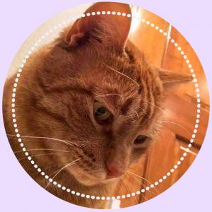 https://www.petstablished.com/pets/public/387300?awo=Demi%27s+Animal+Rescue&widget=true