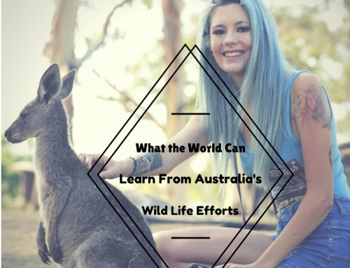 What The World Can Learn From Australia's Wild Life Efforts
