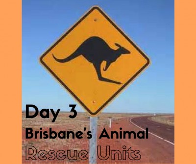3:brisbanesanimalrescue...