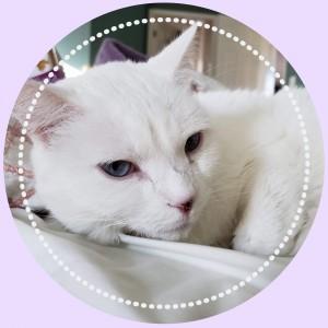 https://demisanimalrescue.com/adoptable-animals/#action_0=pet&animalID_0=13840011&petIndex_0=10